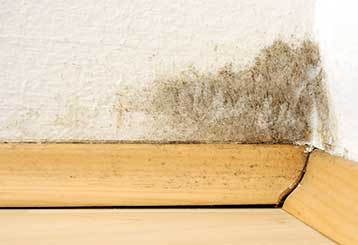 Mold Removal | Carpet Cleaning Pasadena
