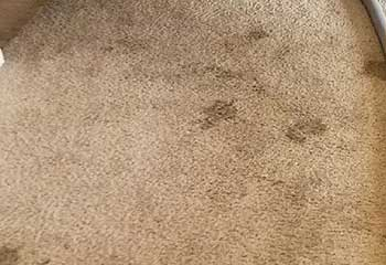 Carpet Stain Removal - Sierra Madre CA